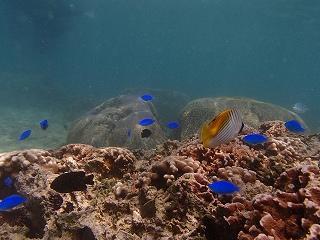 沖縄シュノーケリングポイントお魚