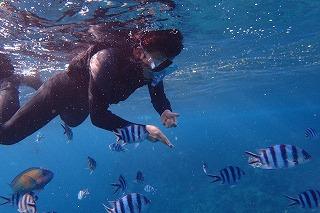 沢山の熱帯魚と一緒に泳ぐシュノーケリング