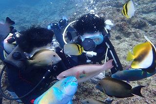 ダイビングで色とりどりの魚