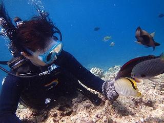 ダイビング餌付け体験