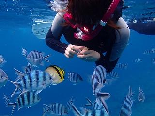 シュノーケリングでたくさんお魚