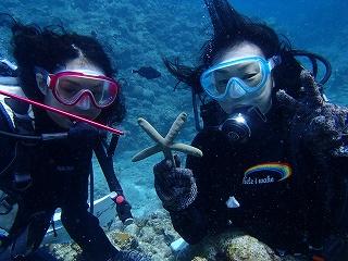 アオヒトデと水中写真ダイビング