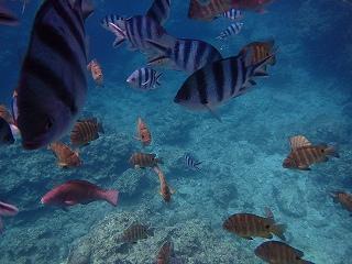 青の洞窟シュノーケリング魚