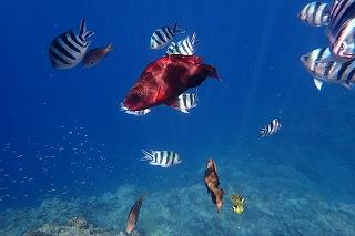 シュノーケリング色々な魚