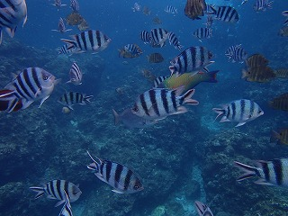 綺麗な熱帯魚がたくさん♪シュノーケリングで青の洞窟へ