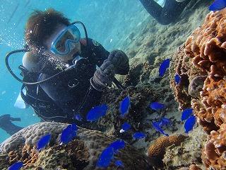沖縄ダイビング 熱帯魚と♪