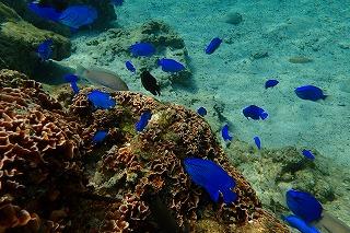 熱帯魚 シュノーケリング