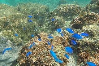 シュノーケリング たくさんの熱帯魚