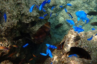 綺麗な熱帯魚シュノーケリング
