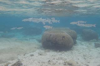 かわいい魚の群れ シュノーケリング