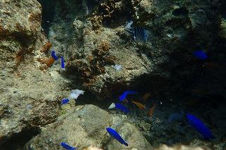 ダイビング 熱帯魚たくさん!