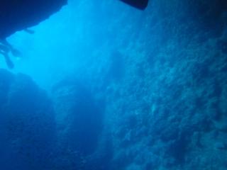 沖縄の海 水中から