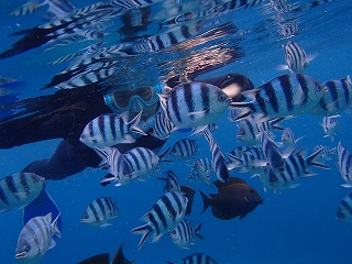 熱帯魚 青の洞窟シュノーケリング