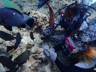 青の洞窟ダイビング エサやり体験