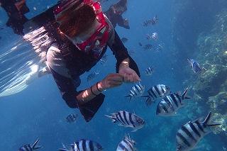 青の洞窟シュノーケリング 熱帯魚にエサやり体験