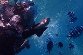 青の洞窟シュノーケリング えさやり体験